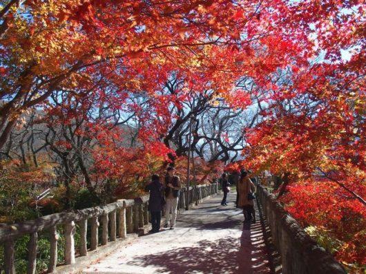 橋の上の紅葉